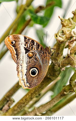 Butterfly or moth, cute insect with eyespots on brown colored wings sitting on green plant on sunny summer day on natural background. Beauty of nature. Wildlife stock photo