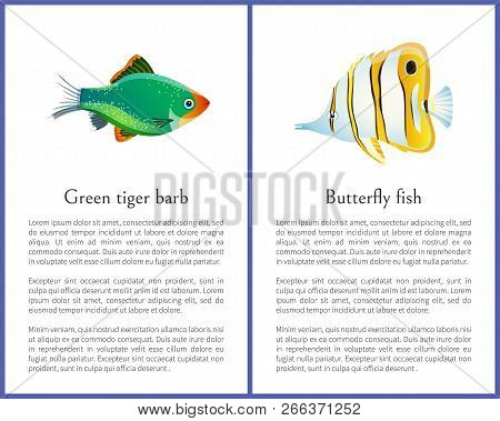 Green tiger barb and striped butterfly fish images, representative of wild animals that live in saltwater, habitants of oceans vector illustration stock photo