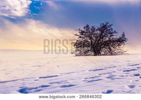 Lonely tree in a magical winter landscape with snow and dramatic sky stock photo