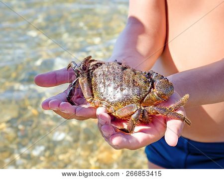 Big scary crab and the boy on the beach stock photo