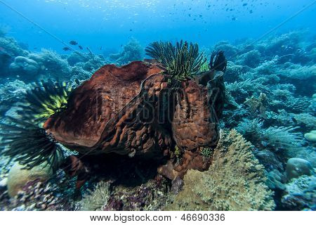 Bunaken National Marine Park. Bunaken is located at the northern tip of the island of Sulawesi Indonesia stock photo