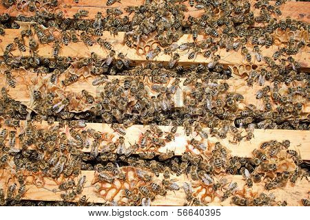 Many working bees for background or texture stock photo