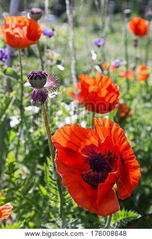 Wonderful Red Poppies Flowers On Wild Meadow-Mini Fridge Magnet Skin (size 20x31)