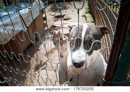 Inside an animal refuge: dog behind the corral stock photo