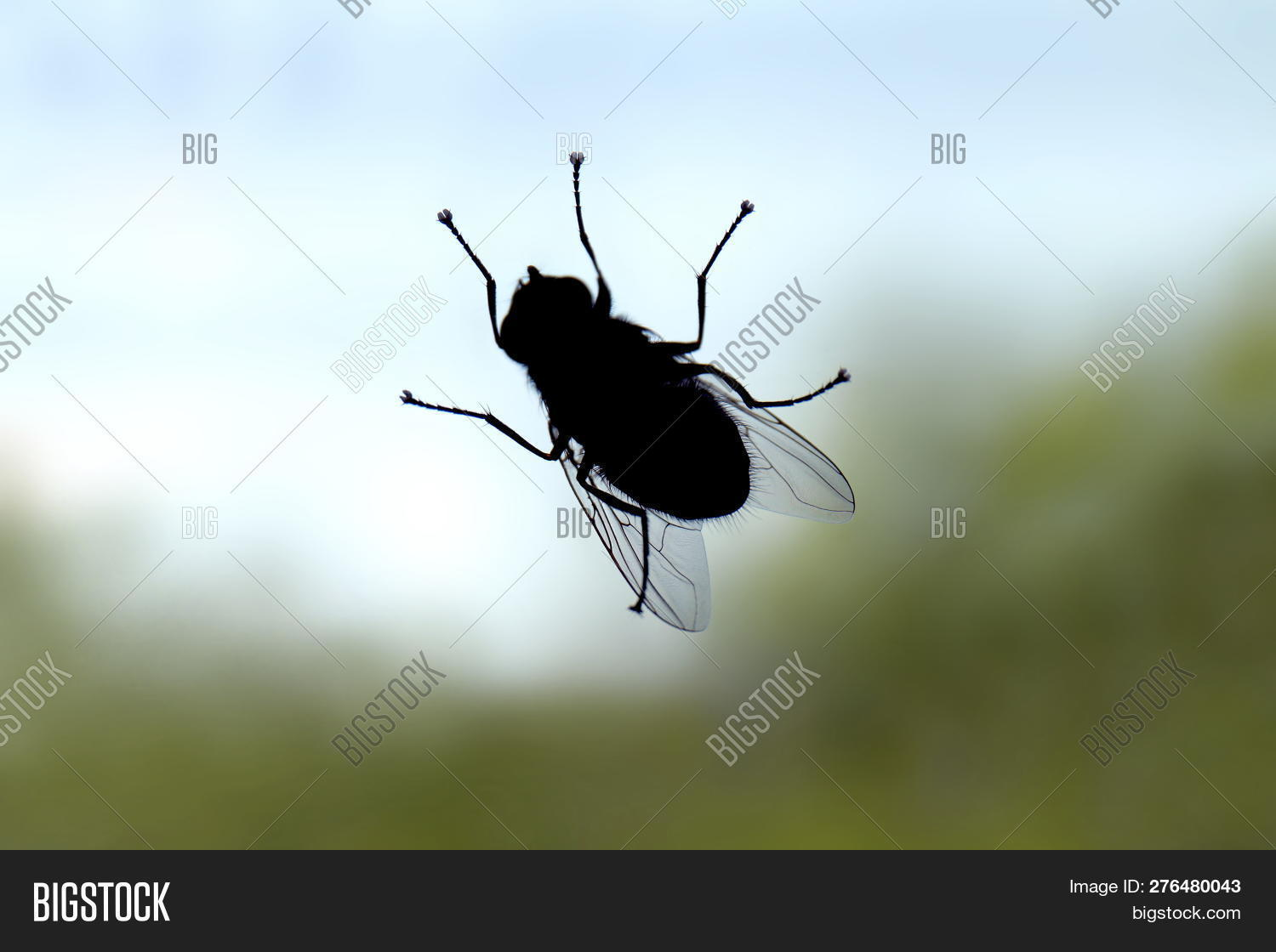animal,art,background,black,blow,blue,bug,closeup,color,design,detail,drawing,drosophila,element,eye,fly,fruit,gen,gene,genetic,graphic,green,house,icon,image,insect,isolated,live,macro,manipulation,melanogaster,natural,nature,pest,portrait,red,retro,shot,sign,small,studio,style,symbol,vintage,white,wildlife,wing