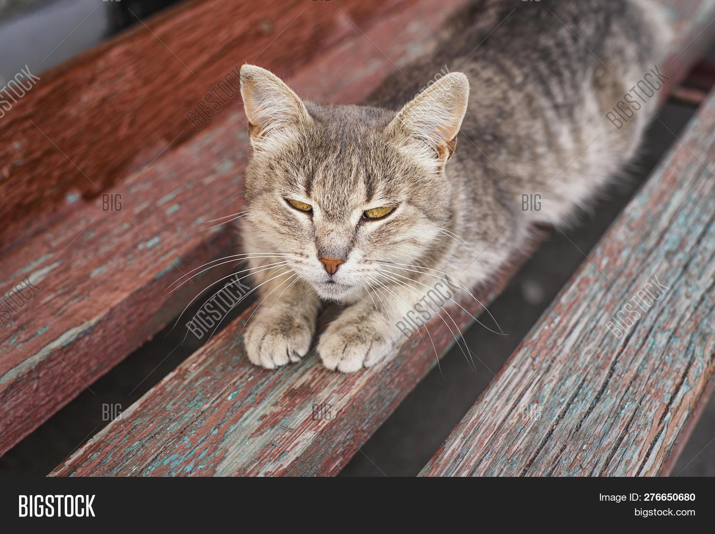 Brilliant Cute Grey Cat Sitting On A Wood Bench Outside A Grey Cat Inzonedesignstudio Interior Chair Design Inzonedesignstudiocom