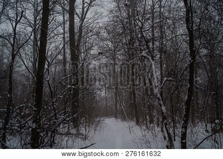 Winter natural view of winter frosty tree tops. Winter background - frosty branches of the winter trees under snowfall. Winter forest background, winter treetops covered with frost. Snowy winter landscape stock photo