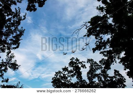 Air show - 4 airplanes in formation against whispy clouds in blue sky framed by tree branches stock photo