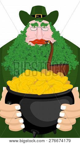 Leprechaun and Pot of gold. beard in Shamrock face. Clover mustache. Ireland holiday. St. Patrick's Day. Traditional Irish holiday. Green leaves trefoil stock photo