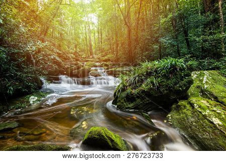 Mountain River Stream Waterfall Green Forest Landscape Nature Plant Tree Rainforest Jungle Small Wat