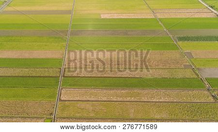 aerial view rice fields, agricultural land with sown green in countryside. farmland with agricultural crops in rural areas Java Indonesia. Land with grown plants of paddy stock photo