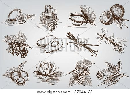 vector sketches natural ingredients used in pharmacology stock photo