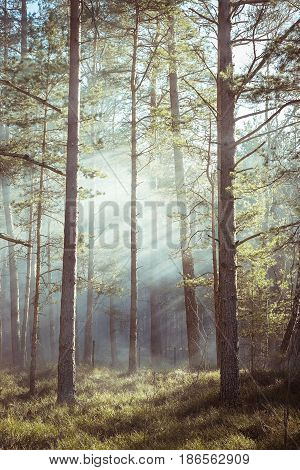 Forest Fire. Clouds Of Heavy Smoke In The Forest-Lg Fridge Magnet Skin (size 36x65)