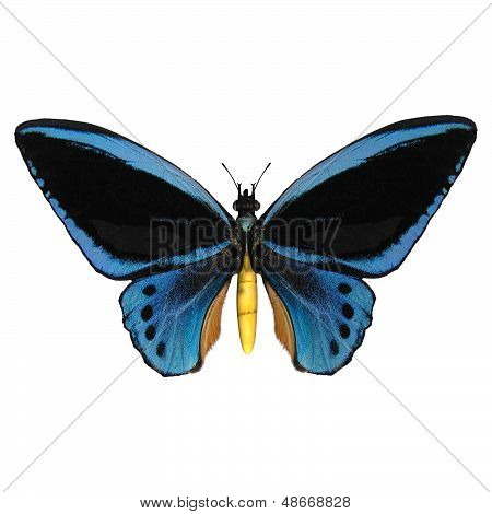 3D digital render of a Birdwing a papilionid butterfliy native to Southeast Asia and Australasia isolated on white background stock photo