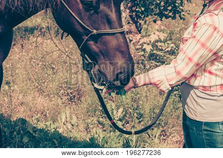 Animal and human love equine concept. Western woman taking care of horse on green meadow