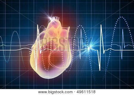 Virtual image of human heart with cardiogram stock photo