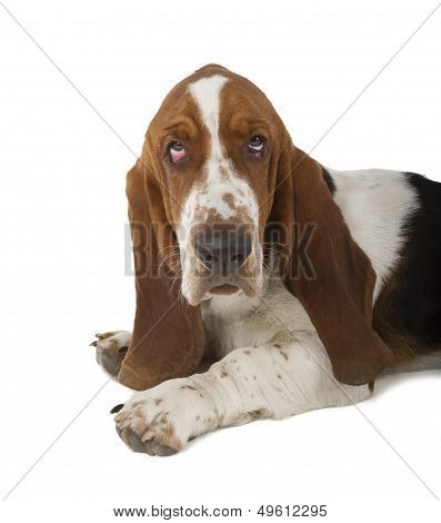 Basset Hound-Lg Fridge Magnet Skin (size 36x65)