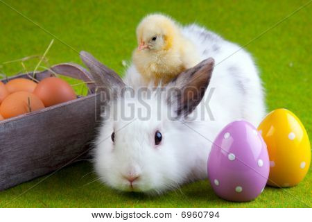 Easter Concept. Small bunny rabbit arranged in easter background. stock photo