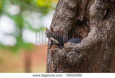 squirrel on a tree, Tivoli park, Ljubljana, Slovenia