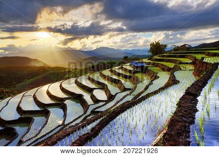 wonderfull sunset rice terrace at bali island, indonesia