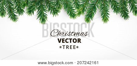 Horizontal banner with vector christmas tree branches and space for text. Realistic fir-tree border, frame isolated on white. Great for christmas cards, banners, flyers, party posters, headers.