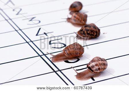 close-up of funny close finish of racing snails stock photo