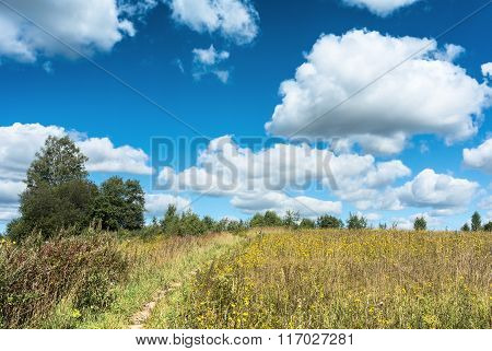 Meadow With Yellow Wildflowers Landscape