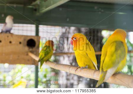 Beautiful Bird, Love Bird