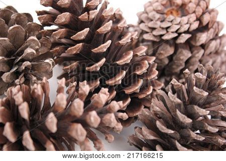 Abstract Macro of Pine Cones Isolated, Close up view of Pine Cones for textures, Pine one Background, Pine Cone Textures, For Designers stock photo