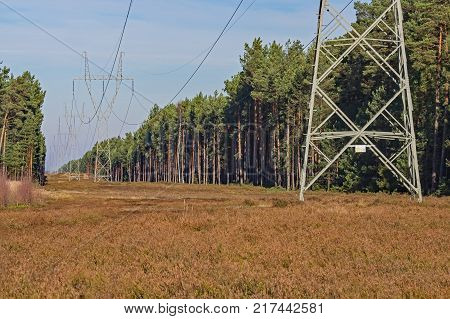High voltage power line.\ A row of metal, gray poles of a high voltage power line. Electric wires hang from the pillars. The line runs through a pine forest. High pine trees grow on both sides. Directly under the line is the moorland. Sky is blue.