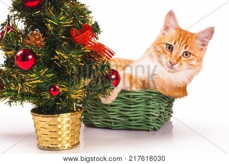 Beautiful red cat with New Year tree isolated on white background stock photo