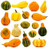 Autumn gourds secluded