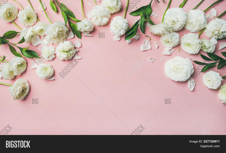 Saint Valentines Day Background Flat Lay Of White Ranunculus