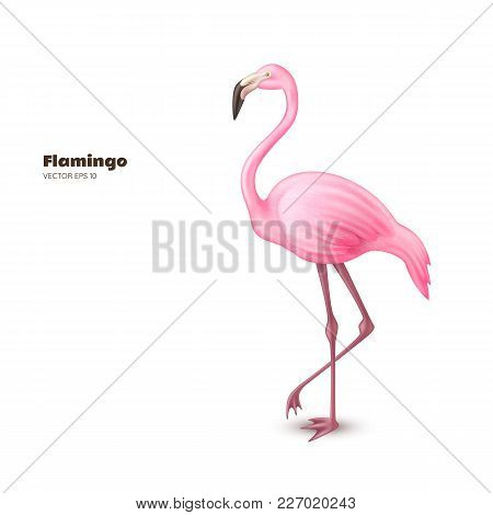 Realistic 3d flamingo. Pink vector tropical exotic bird standing. Holiday travel vacation beach pool party elegant element. Isolated summer paradise poster design illustration, white background stock photo