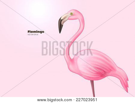 Realistic 3d flamingo. Pink vector tropical exotic bird standing. Holiday travel vacation beach pool party elegant element. Isolated summer paradise poster design illustration, pink background stock photo