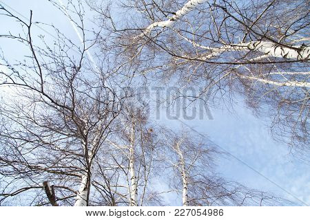 birch against the blue sky . In the park in nature stock photo