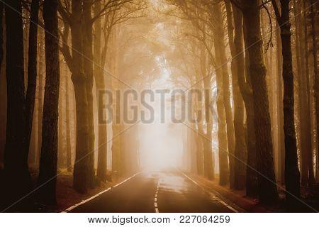 Asphalt road in foggy forest. National park Teide, Tenerife island stock photo