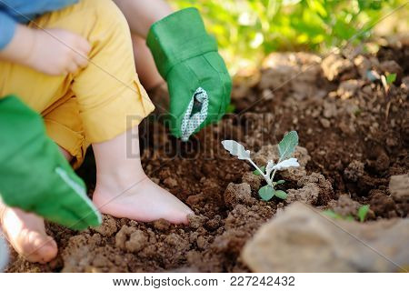 Woman planting seedlings in bed in the garden at summer sunny day. Gardener hands with young plant. Garden tools, gloves and sprouts close-up stock photo
