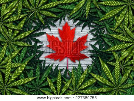 Canadian marijuana concept and Canada cannabis law and legislation social issue as medical and recreational weed usage icon as a red maple leaf on green pot symbols in a 3D illustration style. stock photo