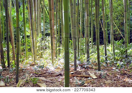 Bamboo forest in the Anduze bamboo plantation in the French department of Gard stock photo