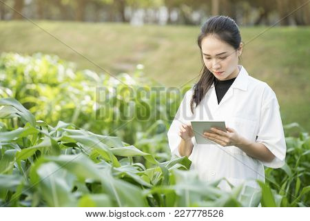 Biotechnology woman engineer examining plant leaf for disease, science and research concept stock photo