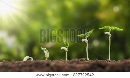 Concept Agriculture Planting Seeding Growing Step In Garden With Sunshine