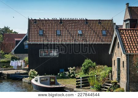 Row pigeons on a roof in the Frisian village of Hindeloopen in the Netherlands stock photo