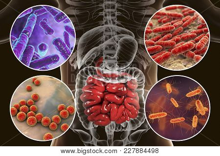 Intestinal microbiome, bacteria colonizing different parts of digestive system, Bifidobacterium, Lactobacillus, Enterococcus and Escherichia coli, 3D illustration stock photo