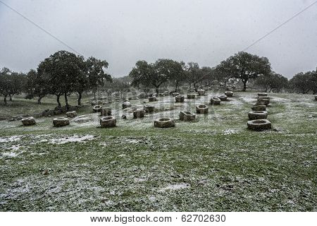 Holm oaks scenery with stone troughs where the cattle eat in spring taken just before starting to snow in Parque Natural de Sierra Morena Andújar Andalusia Spain