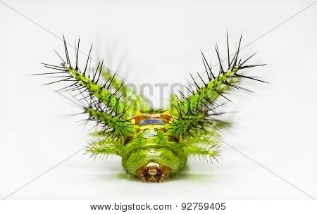 Close up face of Stinging nettle slug caterpillar phocoderma velutina moth stock photo