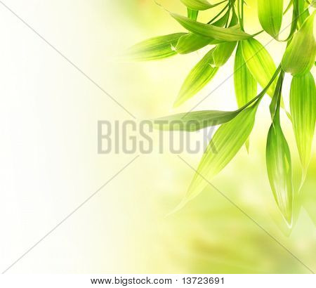 Green bamboo leaves over abstract blurred background stock photo
