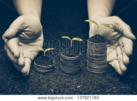 hands holding trees growing on coins / csr / sustainable development / economic growth / trees growing on stack of coins / Business with environmental concern stock photo