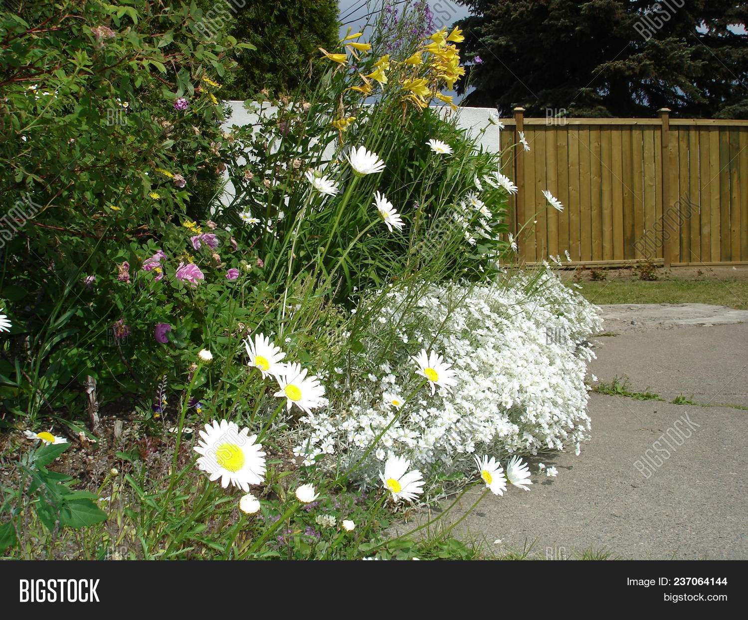 Wispy Flower Bed With White And Tall Flowers Photo Stock