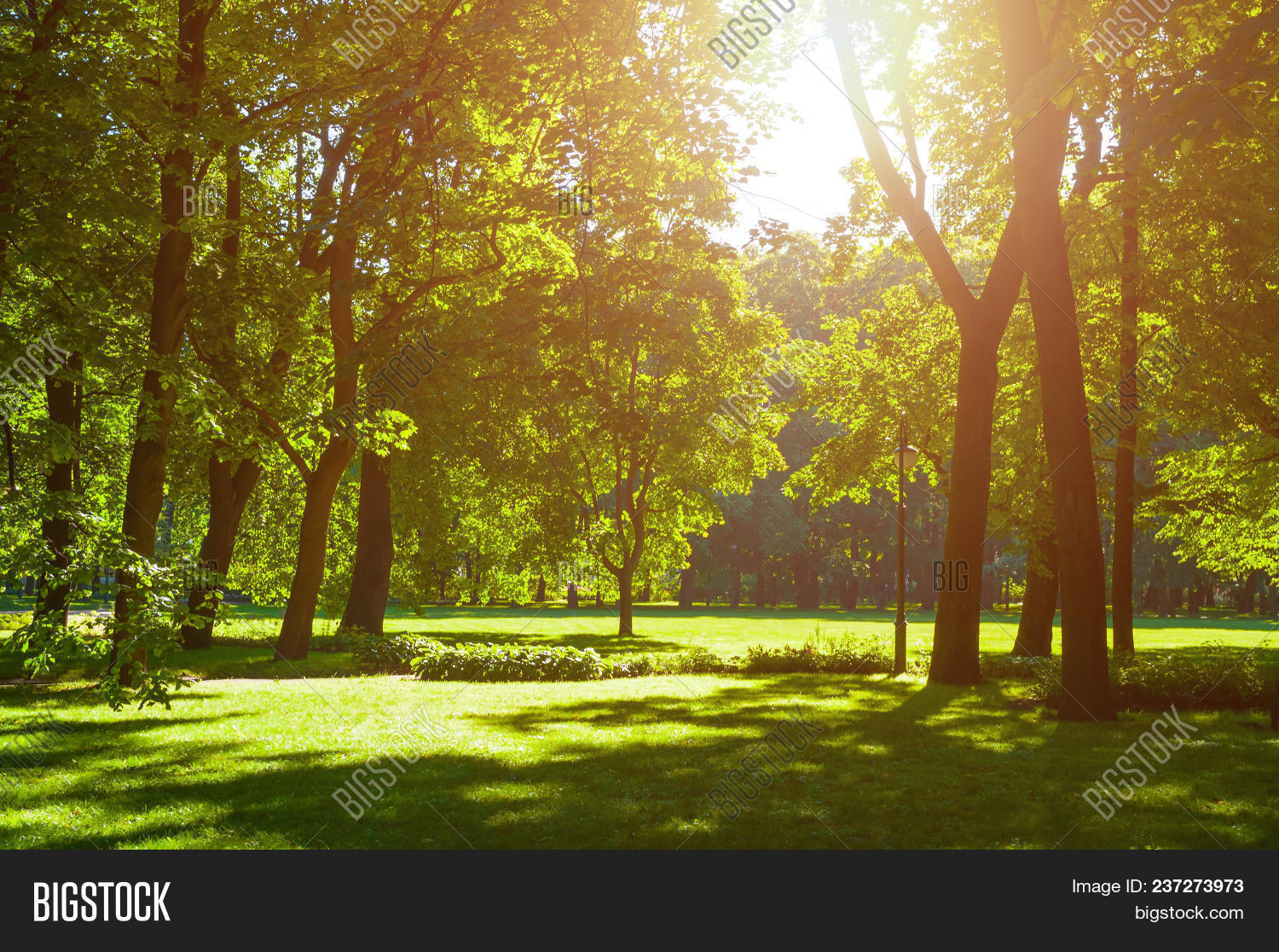 Summer landscape - colorful summer city park with deciduous green trees in sunny weather. Summer park trees lit by soft summer sunlight, colorful sunny summer park landscape scene. Summer day in the city summer park